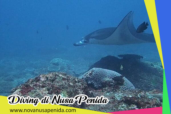 Diving di Nusa Penida