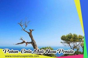 Pohon Cinta Mati di Nusa Penida