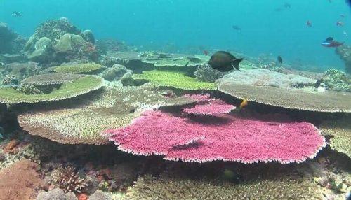 SD Point Nusa Penida Salah Satu Spot Untuk Diving