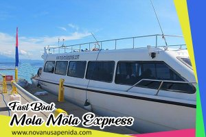 Fast Boat Mola Mola Express ke Nusa Penida
