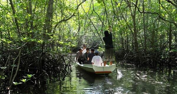 explore hutan mangrove nusa lembongan