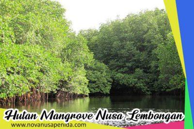Hutan Mangrove di Nusa Lembongan