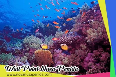 Wall Point di Nusa Penida