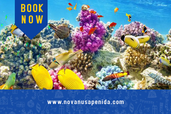 Tips Snorkeling di Nusa Penida Untuk Pemula