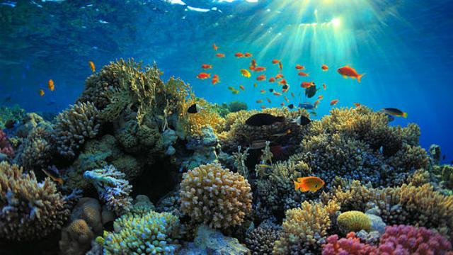 TIps Snorkeling Nusa Penida